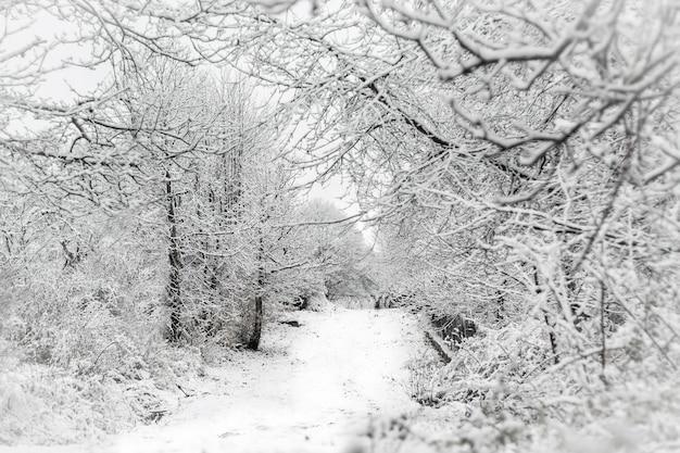 Strada di paesaggio invernale dopo una nevicata