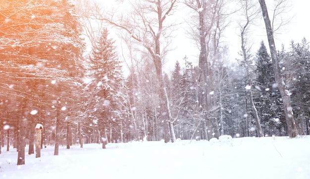 Distese innevate del paesaggio di inverno. un parco in inverno nella neve. strada il giorno d'inverno.