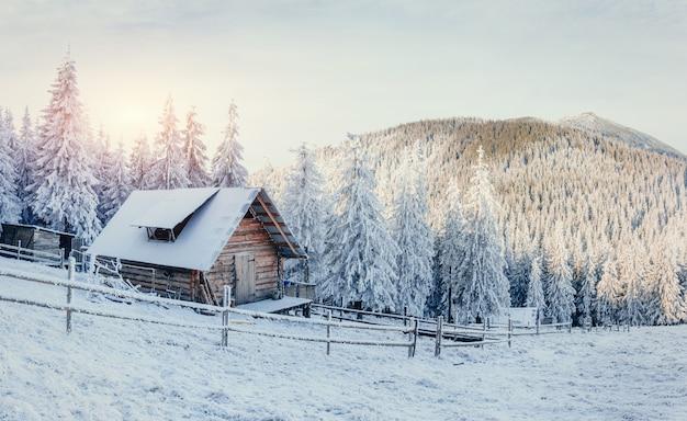 Paesaggio invernale di alberi innevati