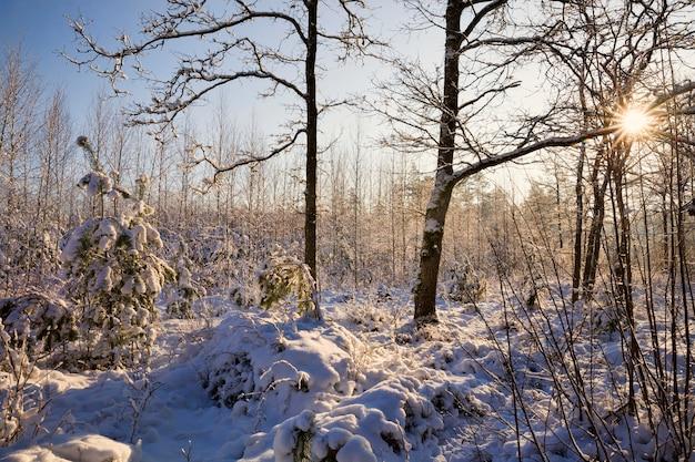 Paesaggio invernale con tempo soleggiato nella foresta