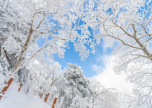 Paesaggio invernale neve bianca di montagna in corea.