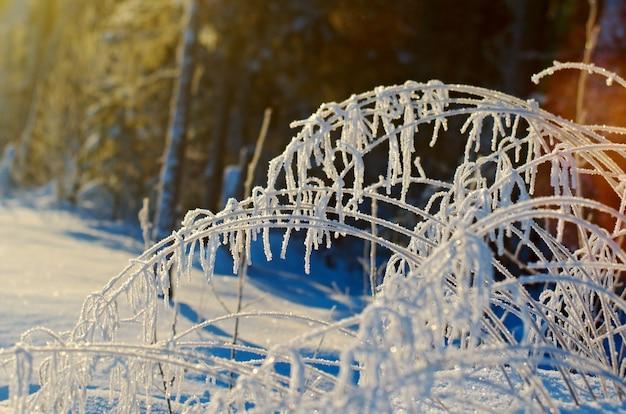 Paesaggio invernale. scena di bellezza invernale