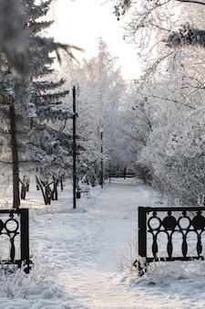 Paesaggio invernale. strada invernale e alberi coperti di neve. parco cittadino