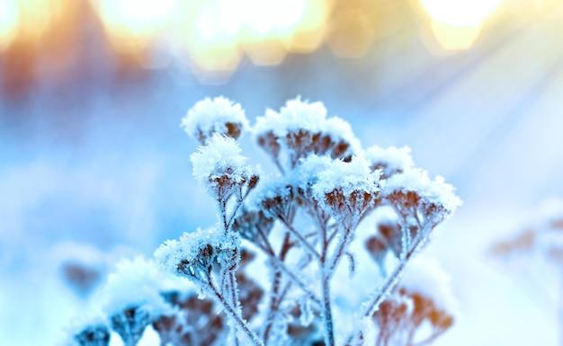 Paesaggio invernale. scena invernale .fiore congelato