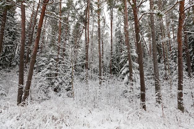 Paesaggio invernale con diversi tipi di alberi