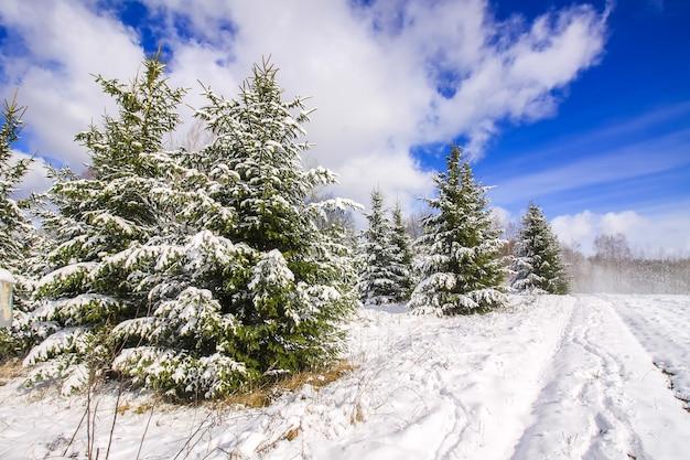 Paesaggio invernale con alberi forestali e campo coperto di neve.