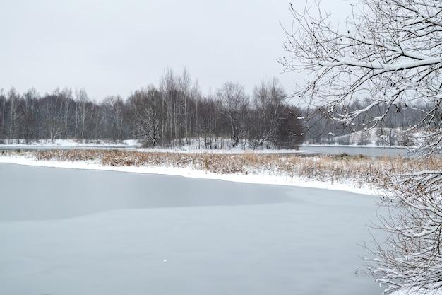 Paesaggio invernale con lago ghiacciato e piante secche tifa e alberi spogli all'orizzonte