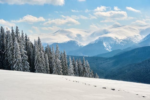 Paesaggio invernale con colline di alta montagna ricoperte da una foresta di pini sempreverdi dopo abbondanti nevicate in una fredda giornata invernale.