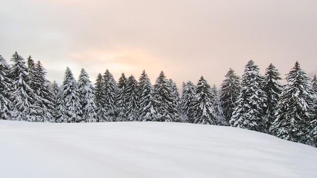 Paesaggio invernale con molta neve e pini innevati
