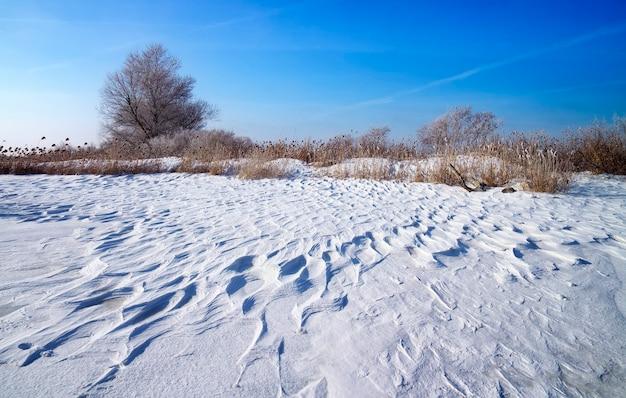 Paesaggio invernale con canne, alberi e fiume ghiacciato