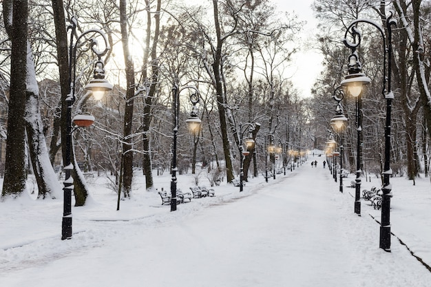 Paesaggio invernale con parco innevato