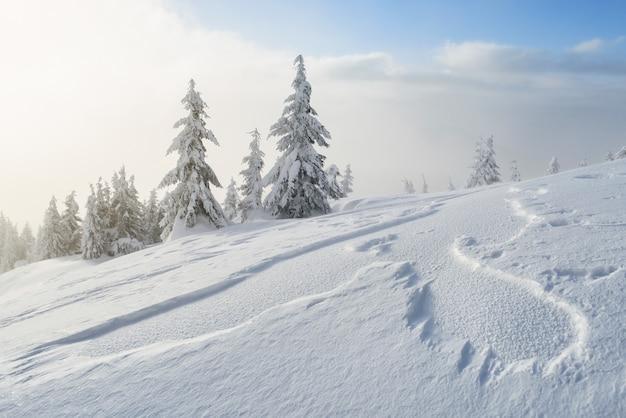 Paesaggio invernale con abeti innevati e cumuli di neve dopo una bufera di neve in montagna