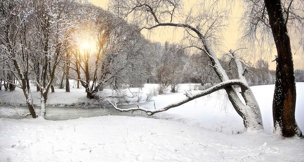 Paesaggio invernale con alberi innevati e cielo soleggiato giallo