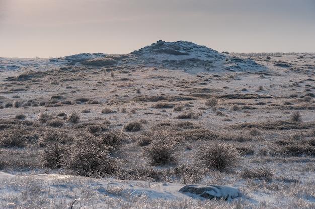 Paesaggio invernale con steppa ricoperta di neve. erba gelida nella prateria innevata