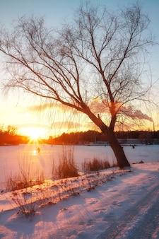 Paesaggio invernale con cielo al tramonto. composizione della natura.