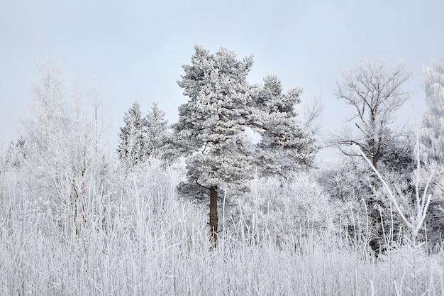 Alberi forestali misti invernali ricoperti di neve bianca