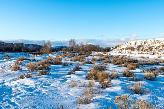 Mattina d'inverno con neve e freddo nel parco nazionale del grand teton, wyoming