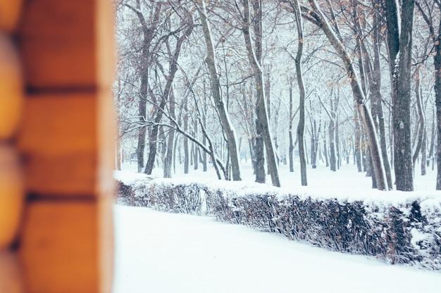Priorità bassa della natura di inverno, paesaggio. foresta invernale, parco con alberi innevati