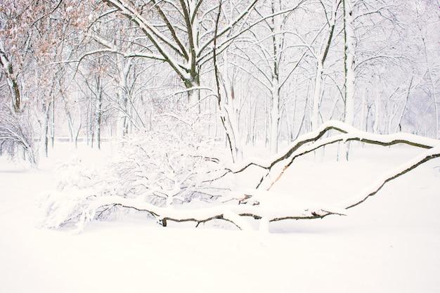 Priorità bassa della natura di inverno, paesaggio