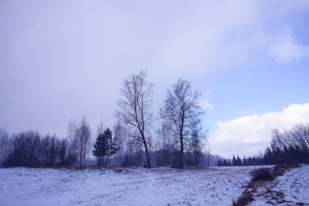 Sfondo della natura invernale