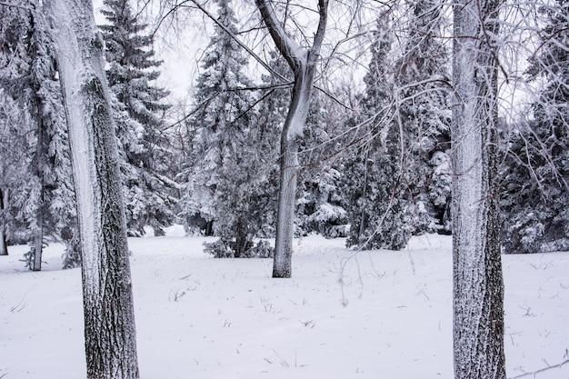 Parco invernale. corona del vicolo. sfondo di neve.