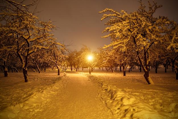 Parco invernale di notte. alberi innevati.