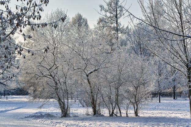 Parco invernale con alberi coperti di brina e neve