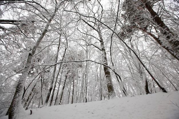 Parco invernale con alberi senza fogliame, la foresta è coperta di neve nella stagione invernale durante le gelate