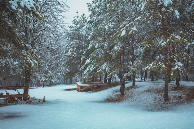 Inverno in pineta