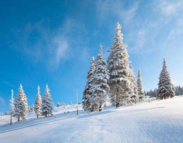 Rima invernale e abeti innevati sul fianco di una montagna sullo sfondo del cielo blu