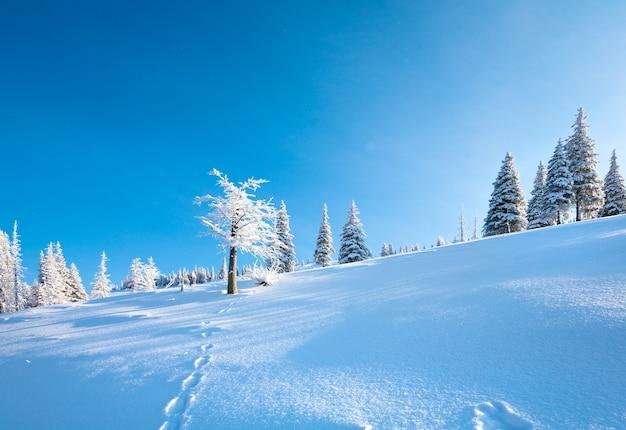 La brina invernale e gli abeti innevati sul fianco della montagna sullo sfondo del cielo blu