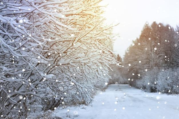 Strada invernale nella foresta