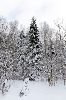 Stagione invernale dell'anno nella foresta