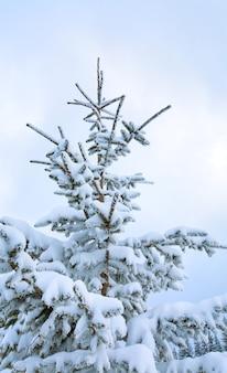 Abete innevato di inverno sul fondo del cielo nuvoloso