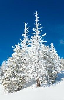 Abeti innevati di inverno sul fianco di una montagna sul cielo blu
