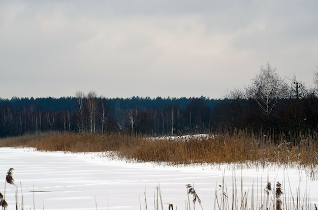 Inverno neve foresta paesaggio fluviale.