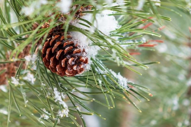 Inverno. la neve si trova su un ramo di pino verde e pigne