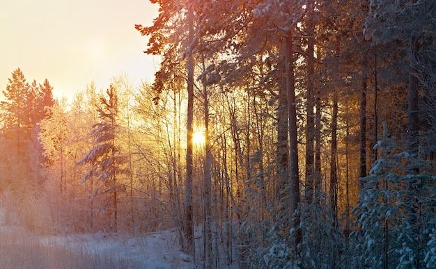 Paesaggio invernale del cumulo di neve. scena invernale
