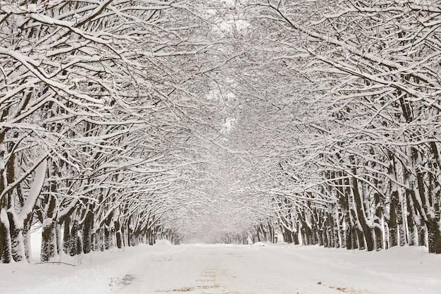Strada del vicolo nevoso di inverno. rami di alberi di acero. strada sterrata rurale tortuosa innevata nel villaggio. paese delle meraviglie invernale dopo la bufera di neve. vacanze di natale, viaggio in bielorussia