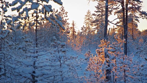 Foresta innevata d'inverno al tramonto. bellissimo paesaggio di natale. profondità di campo poco profonda.