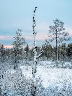 Inverno nevoso foresta settentrionale in una giornata polare.