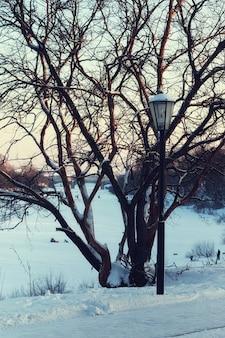 Lampione stradale invernale e albero