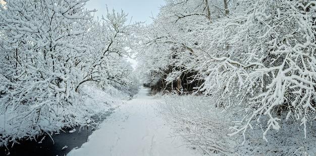 Sentiero invernale circondato da alberi innevati nel parco. west lothian, scozia, regno unito