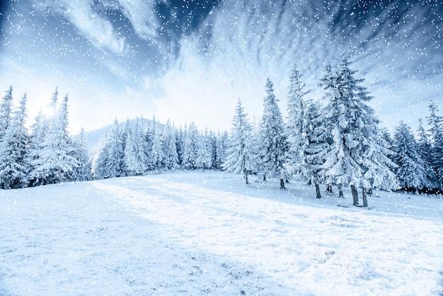 Albero d'inverno nella neve. carpazi, ucraina, europa. bokeh luce ef
