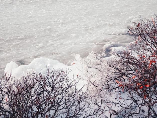 Vista invernale di ghiaccio sui cespugli vicino a un lago coperto di neve
