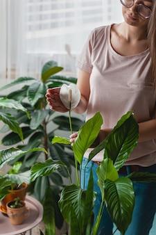 Cura della donna delle piante d'appartamento, tenendo in mano un fiore di spathiphyllum a casa