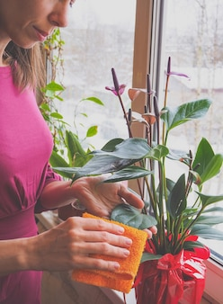 Donna che si prende cura di una pianta in vaso allevamento di anthurium