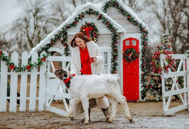 Donna che raggiunge il giovane toro bianco e nero nel ranch di natale con decorazioni.