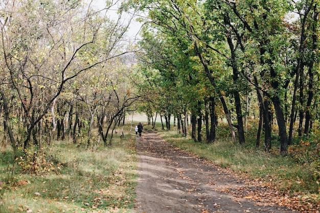 Donna e bambino camminano in un bellissimo sentiero nel bosco con alberi, fogliame verde e giallo, bellezza nella natura, stile di vita sano