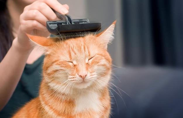 Donna che pettina un gatto allo zenzero con un pettine